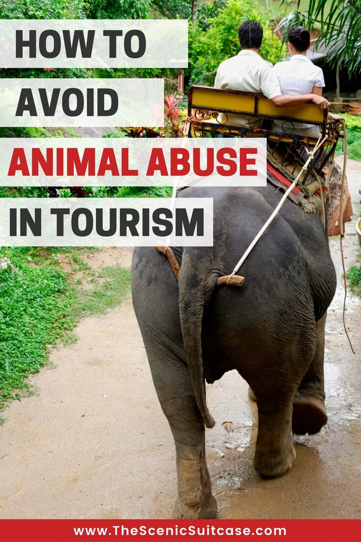 HOW-TO-AVOID-ANIMAL-ABUSE